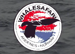 Walsafari